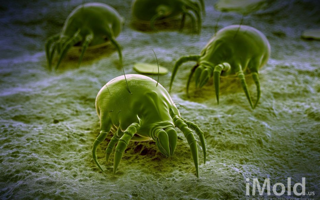 Are Dust Mites Causing Your Allergies?