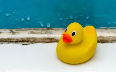 What You Need to Know About Bath Toys and Mold