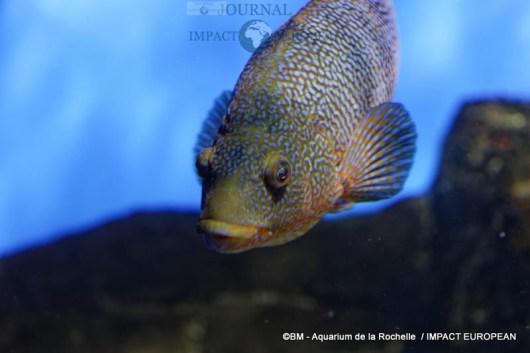 aquarium la rochelle 01