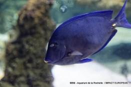 aquarium la rochelle 24