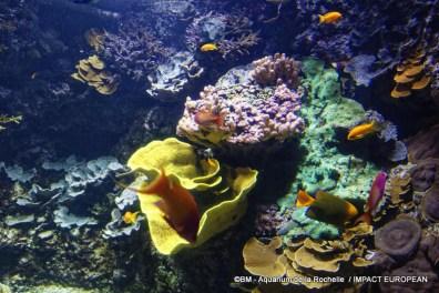 aquarium la rochelle 33