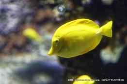 aquarium la rochelle 35