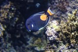 aquarium la rochelle 37