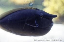 aquarium la rochelle 48
