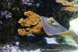 aquarium la rochelle 50