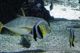 aquarium la rochelle 63