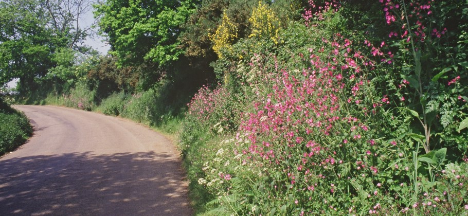 A hedgerow with many colourful flowers grows next to a winding country road