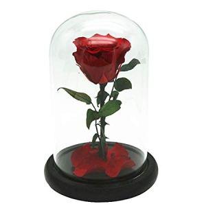 Teca in vetro con rosa rossa 24cm