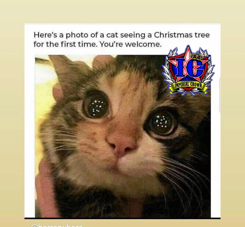 Here's a photo of a cat seeing a Christmas tree for the first time. You're welcome