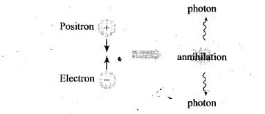 ncert-exemplar-problems-class-12-physics-nuclei-17