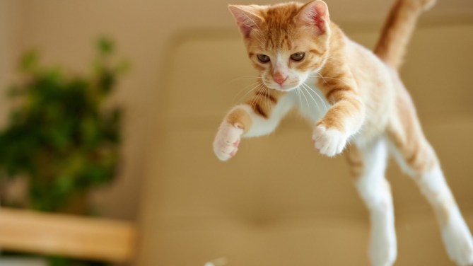 funny-cat-jumping-15-hd-wallpaper