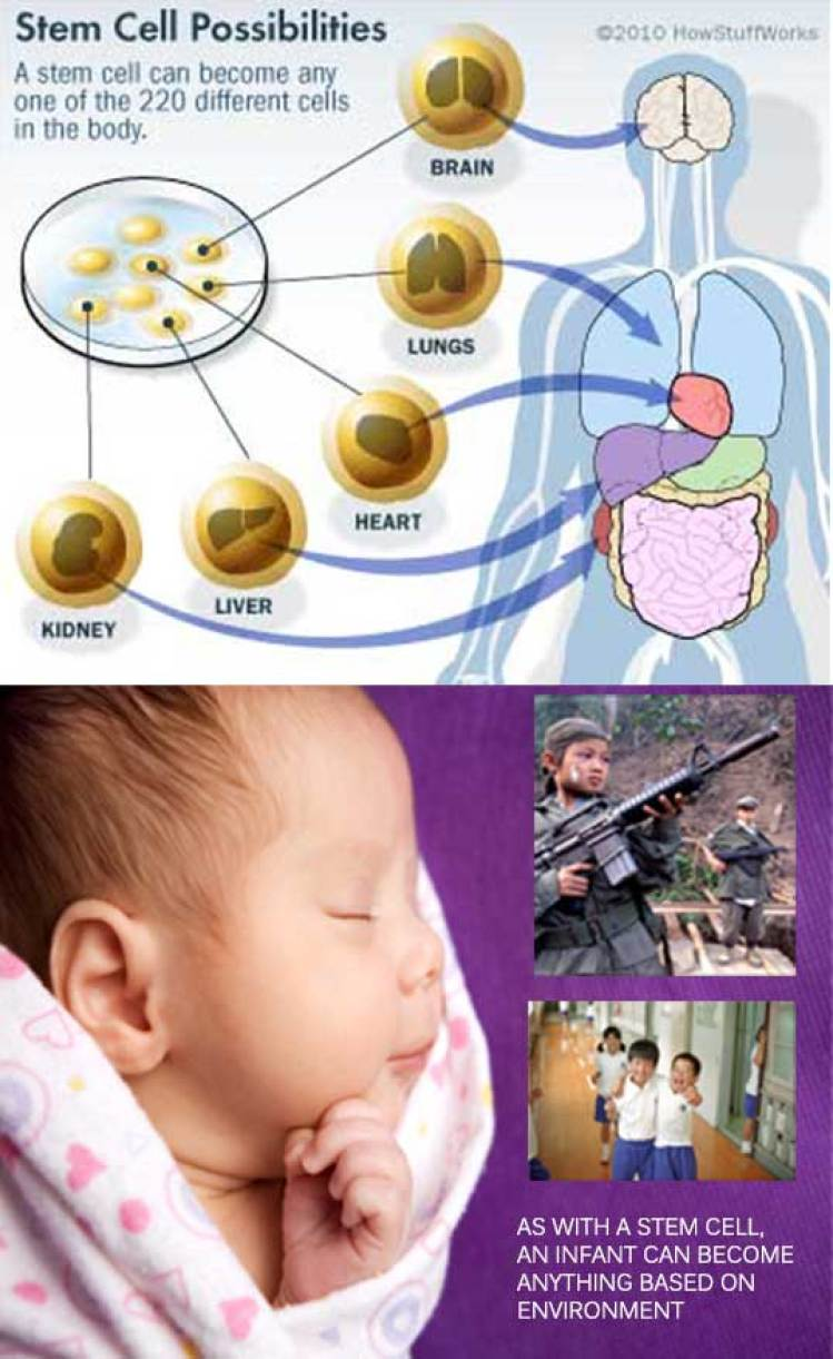 stem-cells-and-infants