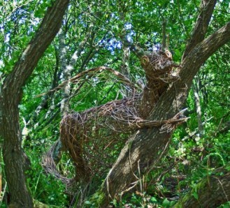 jly07tgpbk-dragon-in-a-tree-newport-pembrokeshire-e1327420035926