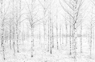 black-and-white-woodland-photography1