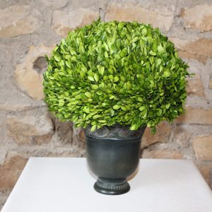 Medium size botanical boxwood in a charcoal gray metal pot Impressive Windows & Interiors Hastings MN