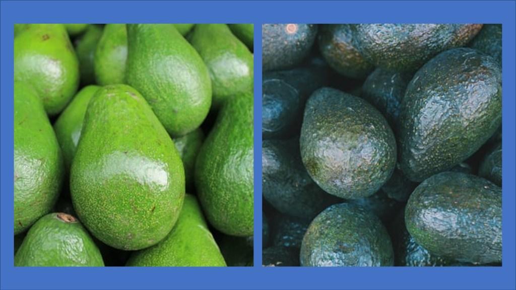 California and Florida avocados