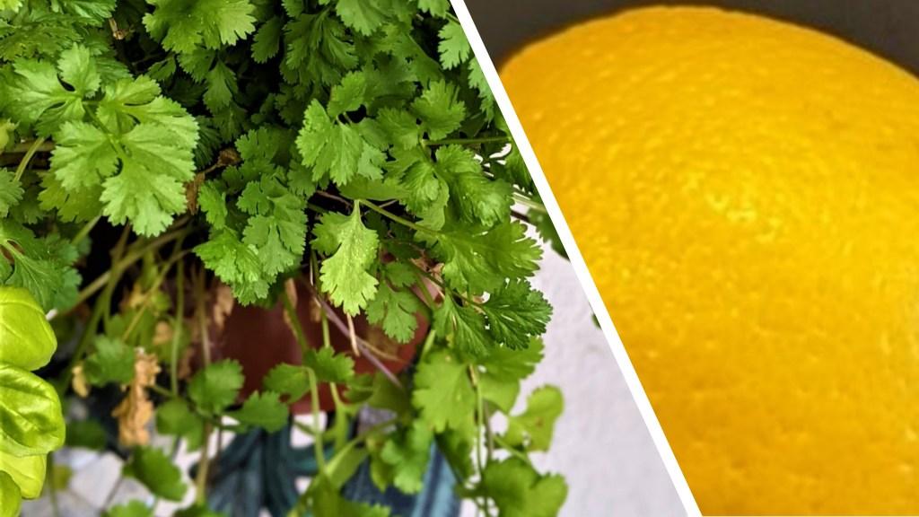 image of fresh cilantro and lemo