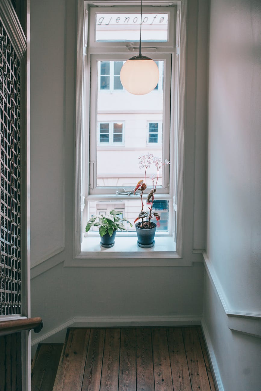 potted plants on windowsill in apartment building