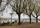 Le programme de plantation d'arbres de Bordeaux Métropole augmente-t-il le risque pollinique ?