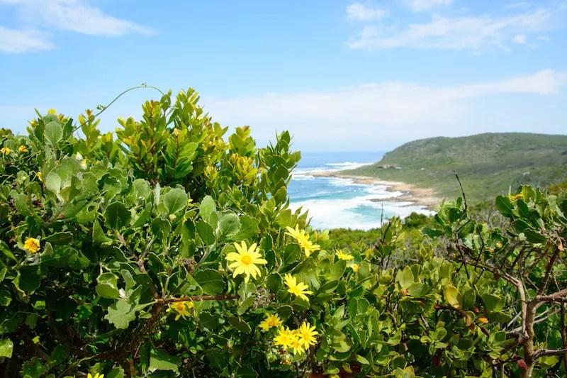 Robberg Island