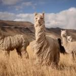 Nachhaltig Reisen in Peru: Reisen mit Mehrwert für Land und Leute