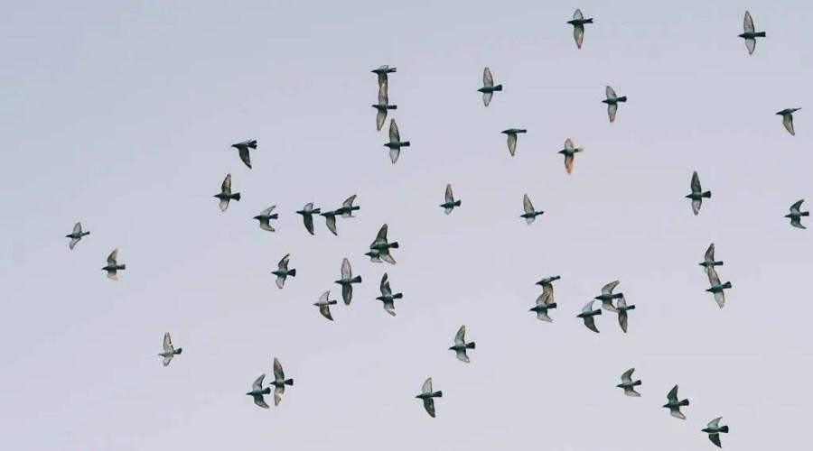 空中攝影無人機空拍 0030