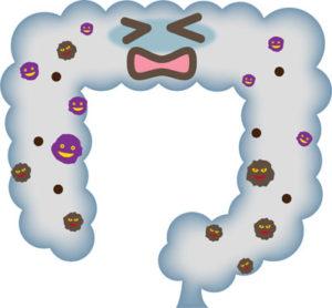 腸内細菌のバランスが崩れ悪玉菌優勢になっていると便やおならが臭くなります