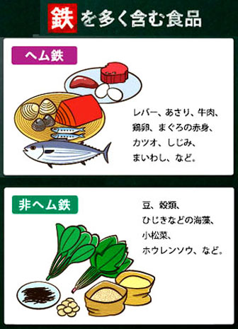 動物性食品に含まれるヘム鉄は、植物性食品に含まれる非ヘム鉄より吸収率が高い