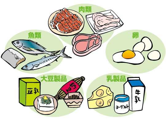 たんぱく質を多く含む食べ物