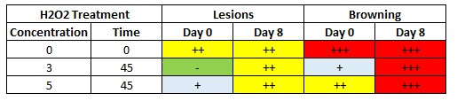 Table 10: Influence of the time on the number of lesions and browning at different H2O2 concentration.