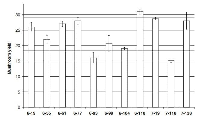 Figure 20: Mushroom yield of the investigated production series.