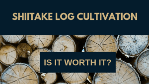 Shiitake Log Cultivation - Is it worth it?