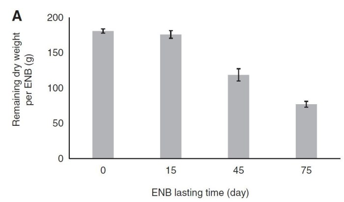 Figure 6: Development of the dry weight of the ENB during the cultivation period