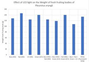 Effect of LED light on the weight of fresh fruiting bodies of Pleurotus eryngii_yo2011