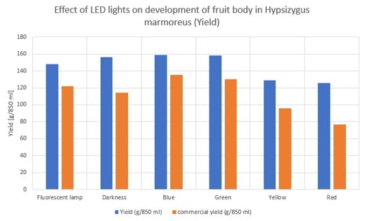 Effect of LED lights on development of fruit body in Hypsizygus marmoreus (yield)