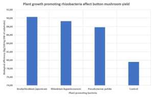 Plant growth promoting rhizobacteria affect button mushroom yield