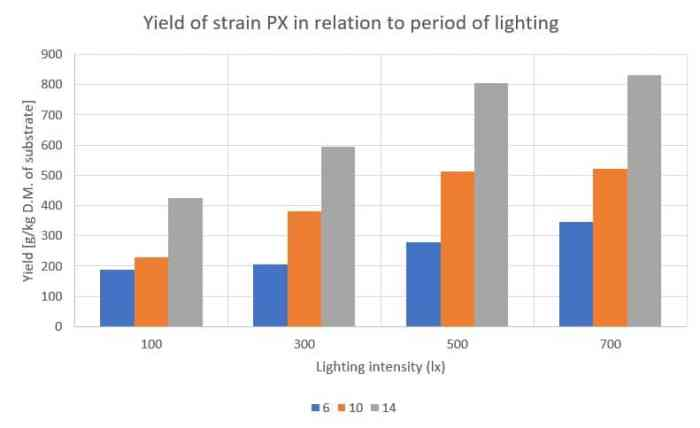 Pleurotus ostreatus_Yield of strain PX in relation to period of lighting