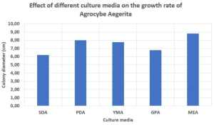 Effect of different culture media on the growth rate of Agrocybe Aegerita