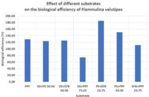 Effect of different substrates on the biological efficiency of Flammulina velutipes