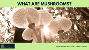 What are mushrooms