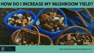 How Do I Increase My Mushroom Yield?
