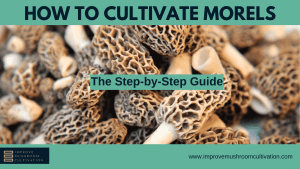 How to cultivate Morels