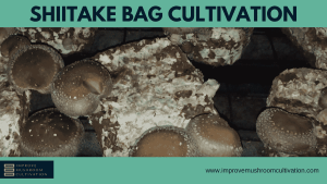 Shiitake Bag Cultivation: The Holy Grail?