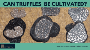 How to cultivate truffles