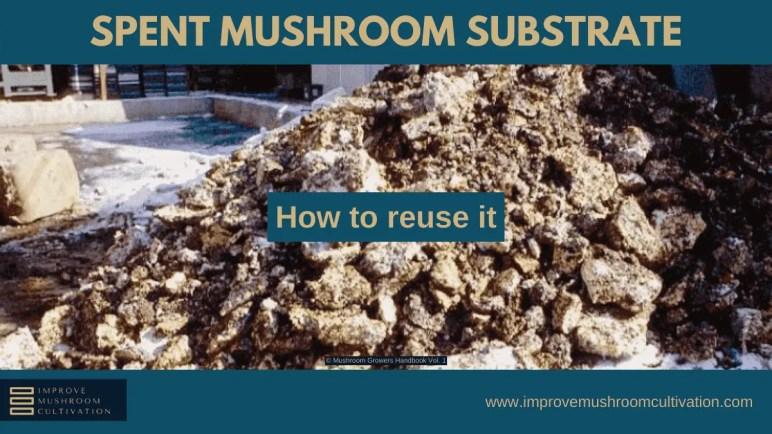 Reusing Spent Mushroom Substrate