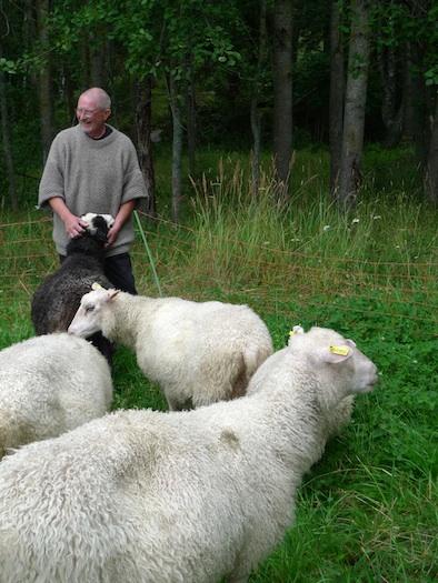 Bovik Farm Sebastian Nurmi with sheep