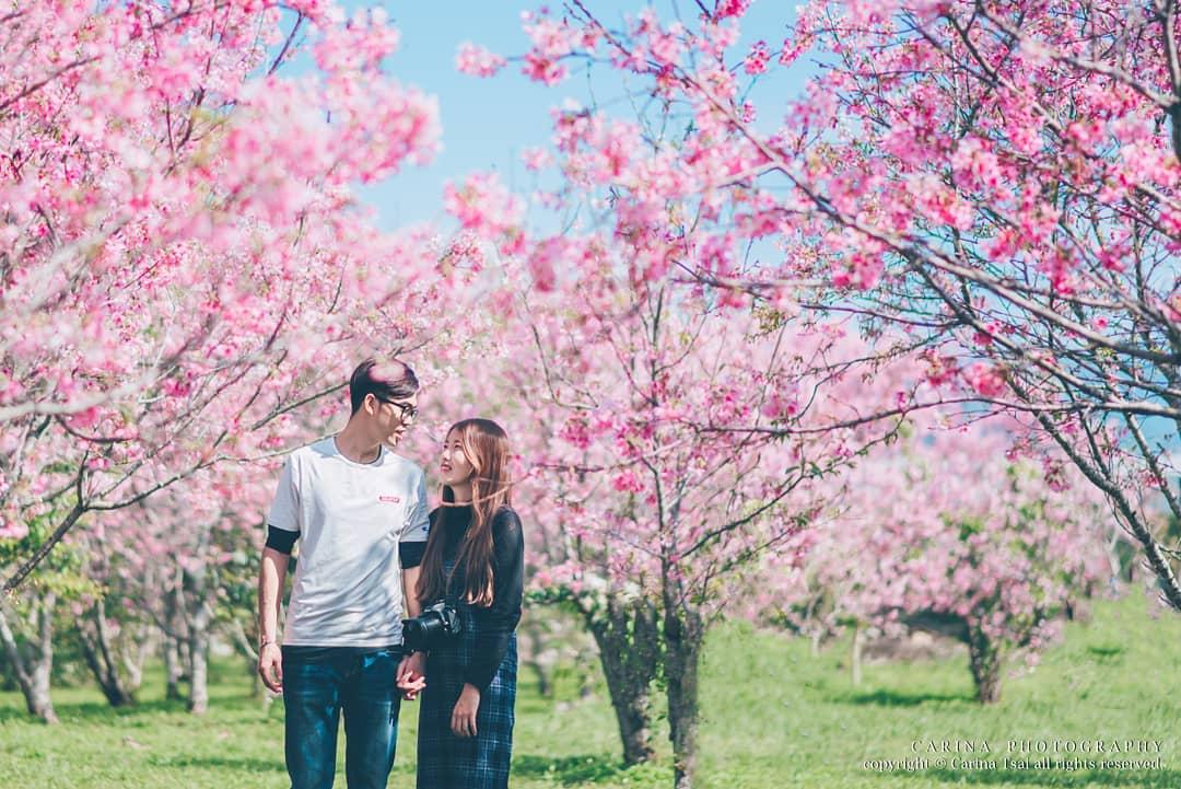 【 2019櫻花季 】浪漫櫻花季登場!不能錯過的「全台20個賞櫻景點」大集合