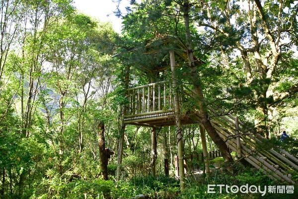 體驗山居生活!台中推薦2間森林系小屋 打造樸實木質調農村風