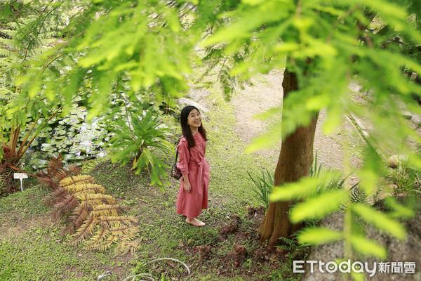 「白石森活休閒農場」宛如踏入一處世外桃花源,約莫20棵的落羽松沿著草地外圍、步道旁種植
