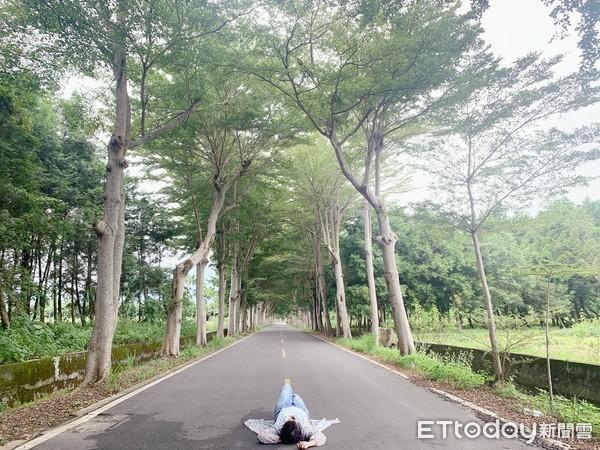龍田自行車道|台東鹿野一日遊 3大景點推薦!一訪鹿野神社和最美綠色隧道